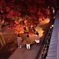 Photos: ライトアップの長円寺参道