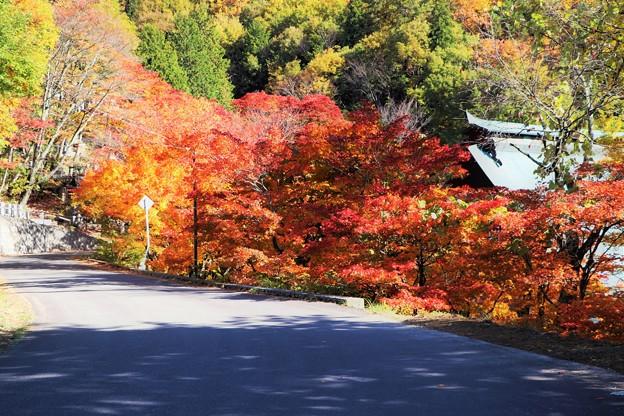紅葉の参道路