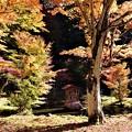 庫裏横の庭園の紅葉