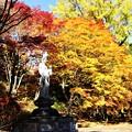 Photos: 境内の紅葉風景