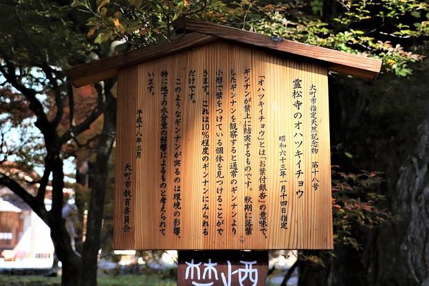 霊松寺のオハツキイチョウ解説板
