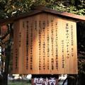 Photos: 霊松寺のオハツキイチョウ解説板