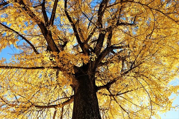 高さ30メートルの巨樹