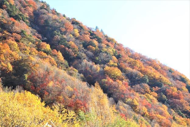 山肌の紅葉