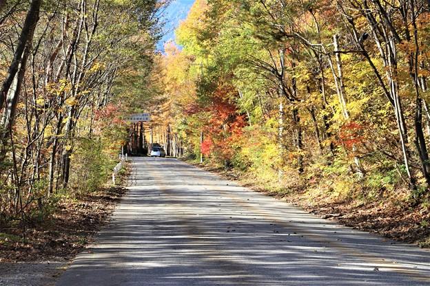 県道326号線の紅葉道路