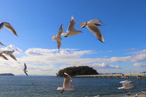 ユリカモメと竹島