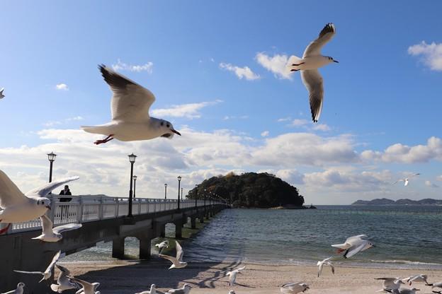 竹島とユリカモメ
