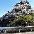Photos: 県道69号線小さな橋のたもとに桜開花