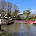 Photos: 水鳥の池