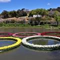 Photos: 水鳥の池に五輪の花輪