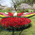 チューリップ花壇