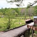 湿原散策木道