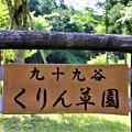 九十九谷くりん草園