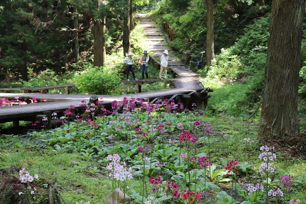 IMG_0107林の中のくりん草園
