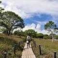 湿原木道の散策見物客