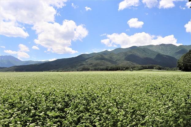 山裾のそば畑