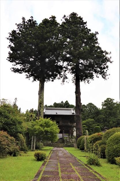 二本の門前杉