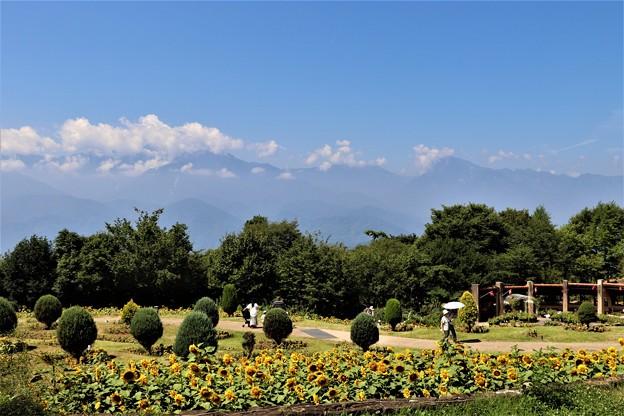 パノラマ花壇景観