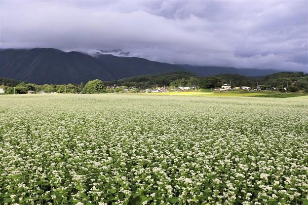 広ーい信州そば畑