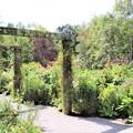 庭園散策路