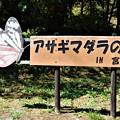 アサギマダラの里・宮田村