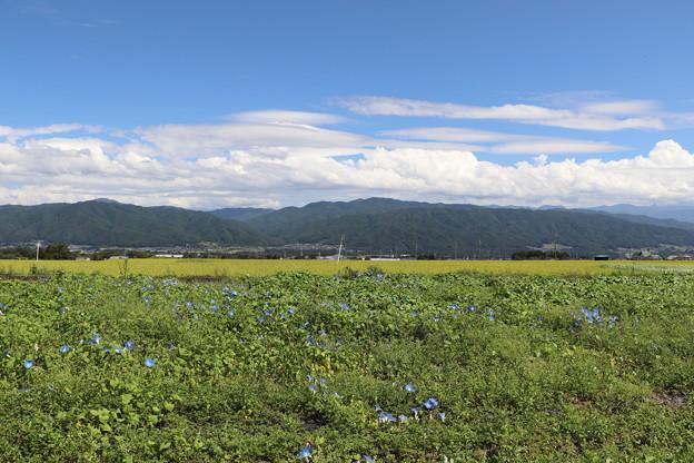 ヘブンリ―ブルー畑と南アルプス