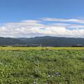 Photos: ヘブンリ―ブルー畑と南アルプス