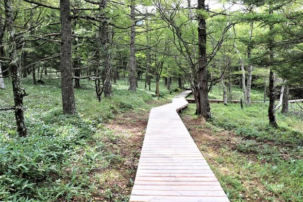 木道遊歩道