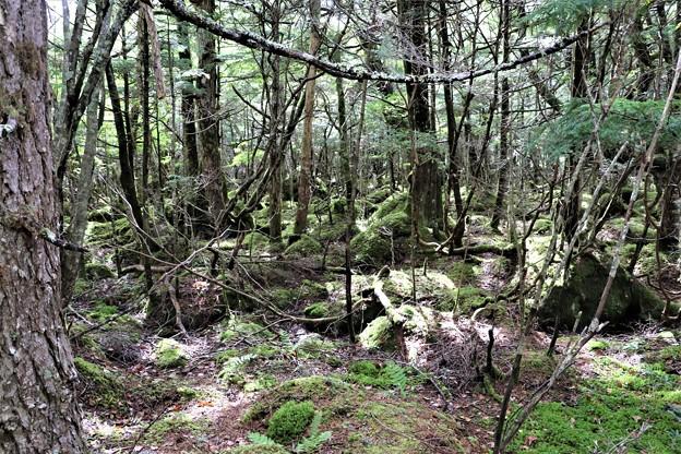 苔の森原生林