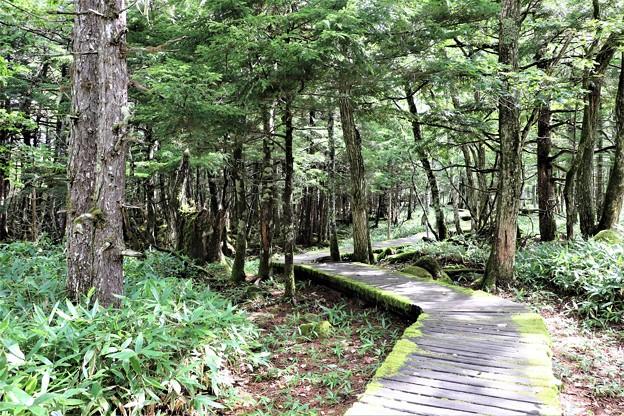 原生林の遊歩道