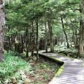 Photos: 原生林の遊歩道