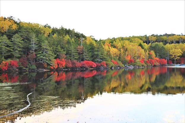 白駒の池紅葉水鏡
