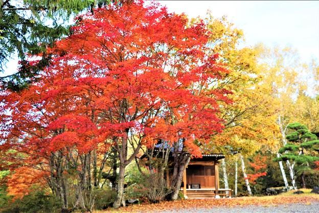 横谷観音と紅・黄葉