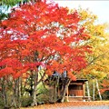 Photos: 横谷観音と紅・黄葉
