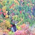 Photos: 横谷渓谷の横谷王滝を望む