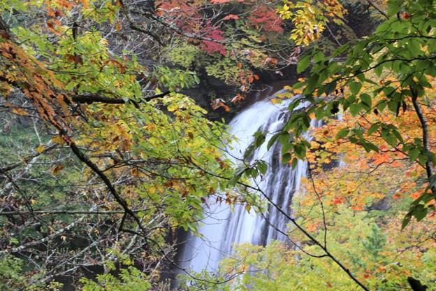紅葉の横谷王滝を望む