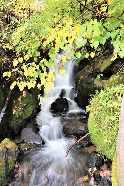 乙女滝の上部渓流