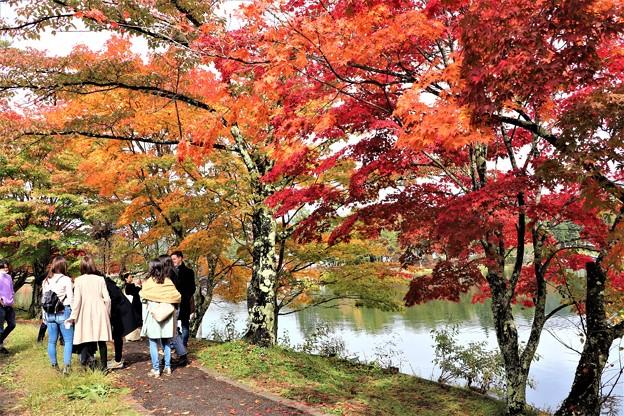 蓼科湖紅葉見物客