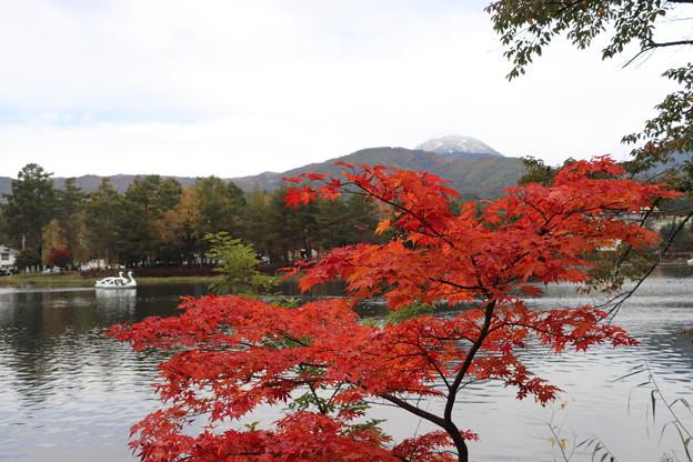 蓼科湖の紅葉