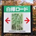 日本一白樺ロード案内
