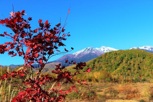 紅葉と乗鞍岳