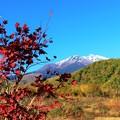 Photos: 紅葉と乗鞍岳