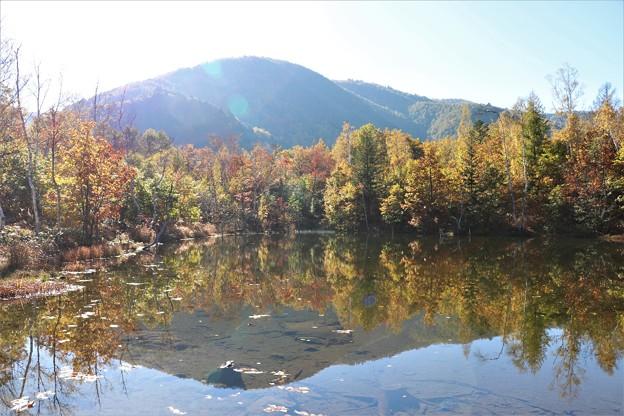 まいめ池の黄葉