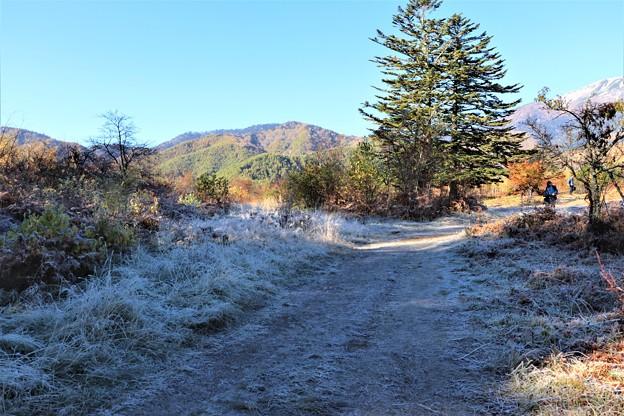 霜の散策路