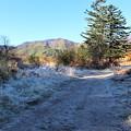 Photos: 霜の散策路