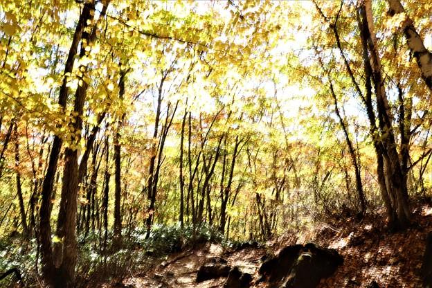 善五郎の滝散策路