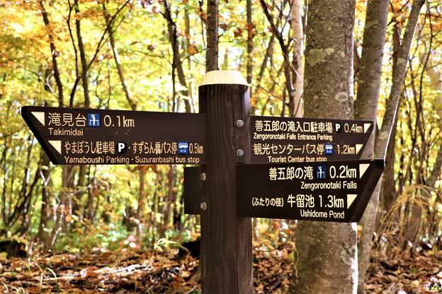 善五郎の滝散策路分岐