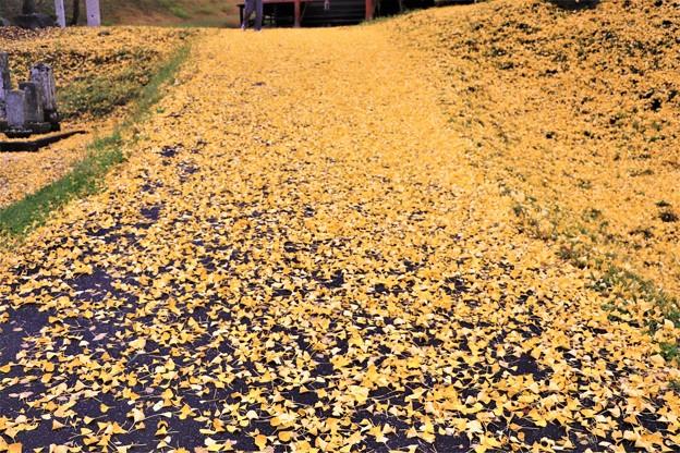 黄色いジュウタンの参道