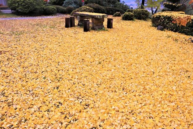 大イチョウの黄色いジュウタン