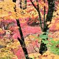 Photos: 錦の紅葉